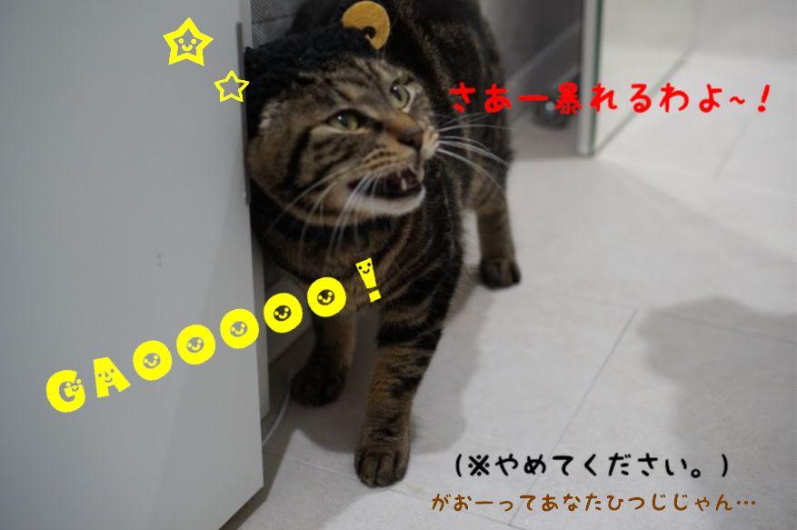 猫飼い主さんにおすすめの加湿器は?猫の乾燥対策に加湿器は必須!