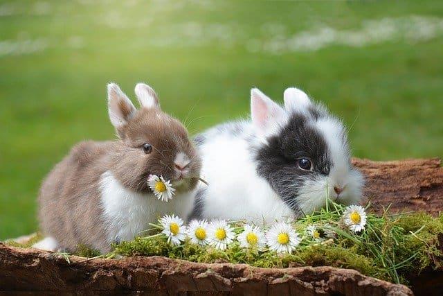 3. กระต่าย