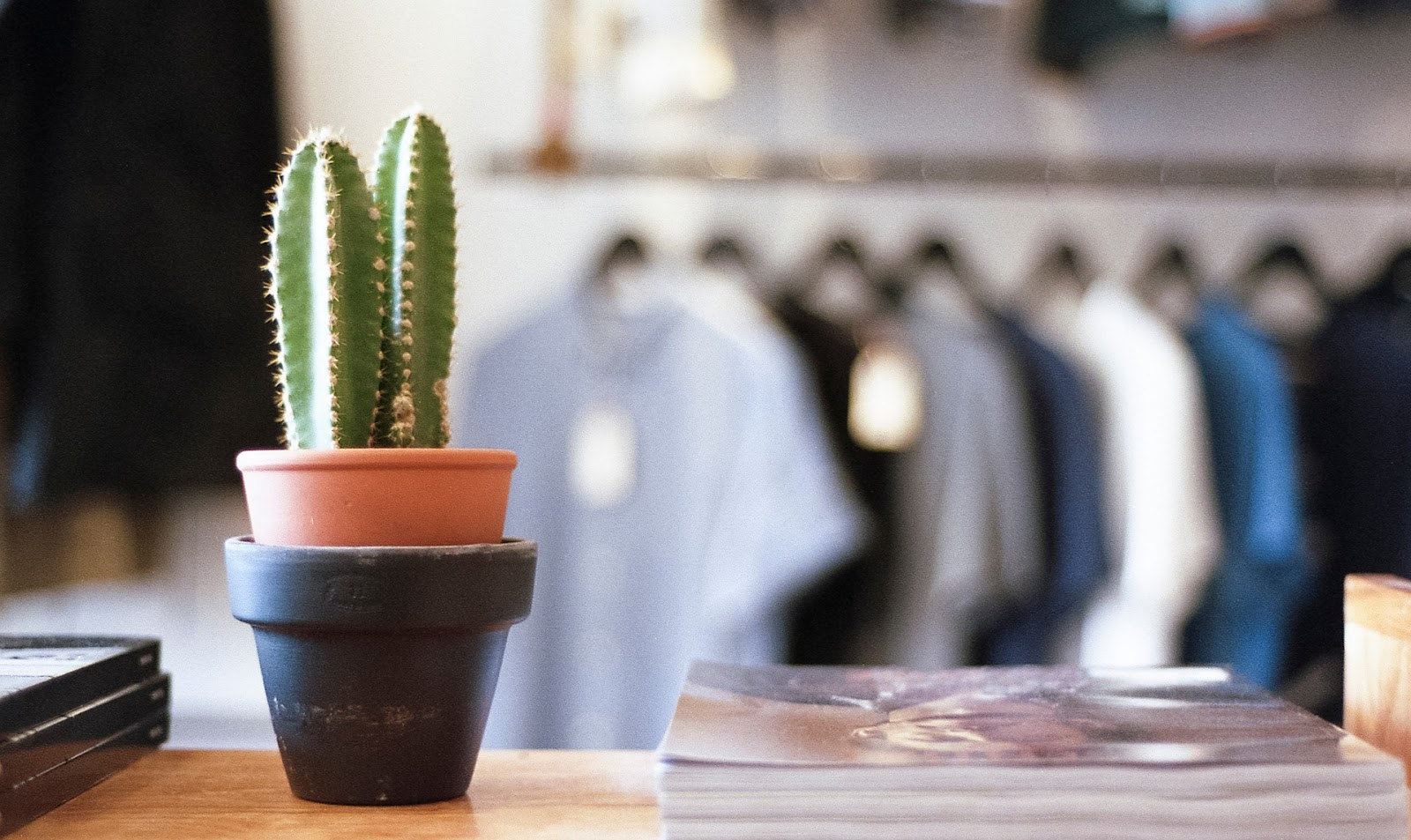 Cactus in pot on desk