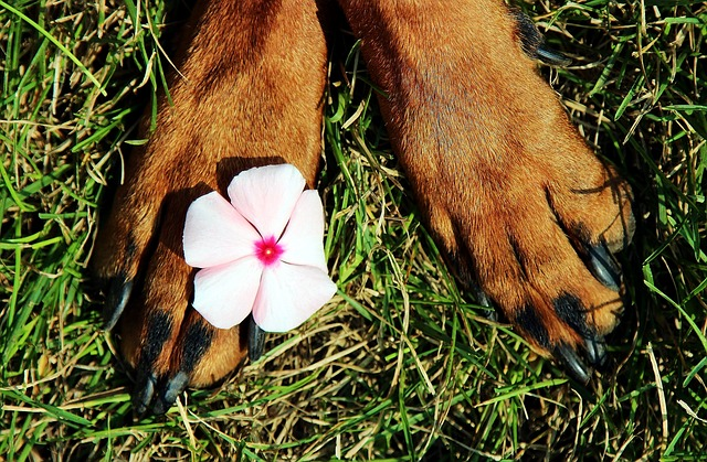 Amazing Dog Paw protectors to try right in 2021! These are some of the best dog paw wax and balm to protect dogs from summer's heat