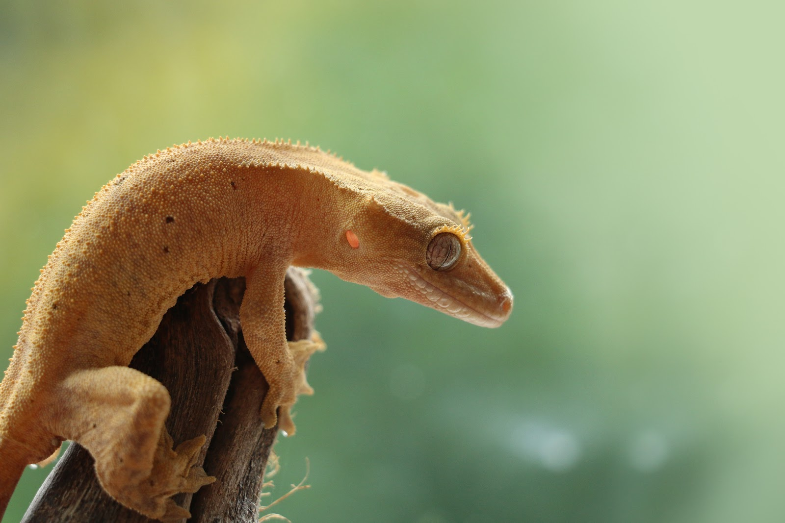 Gecko on branch