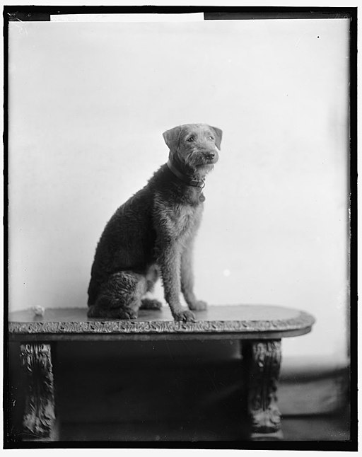 history of White House pets