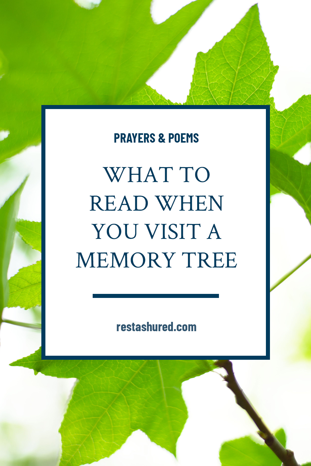 Photo of What to expect when you visit a memory tree