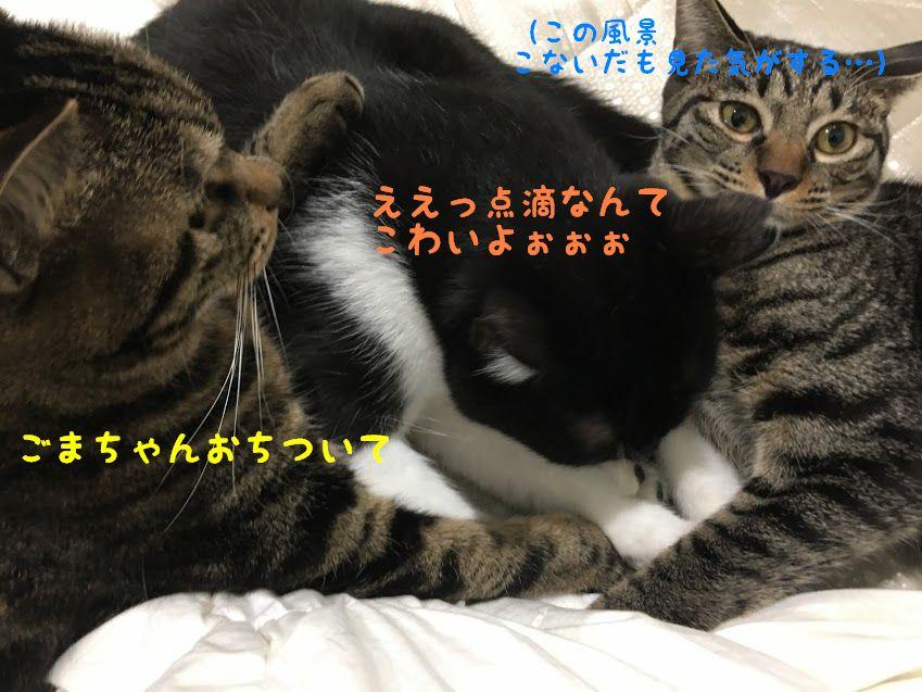 猫に多い腎不全 皮下点滴 輸液とは?効果は?自宅でする時のコツと頻度について