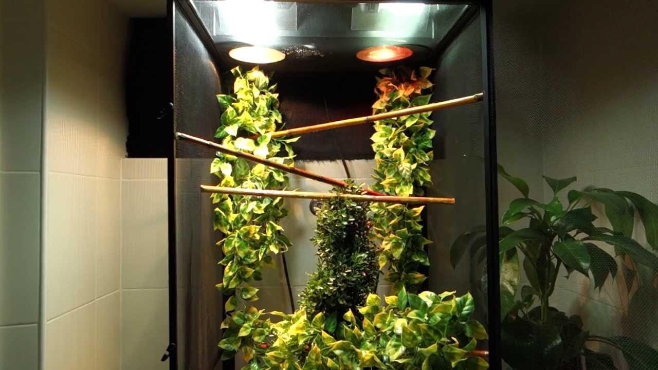 Image result for panther chameleon lighting