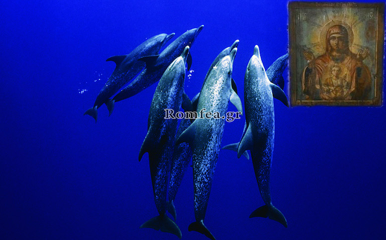 dolphins-icon.jpg
