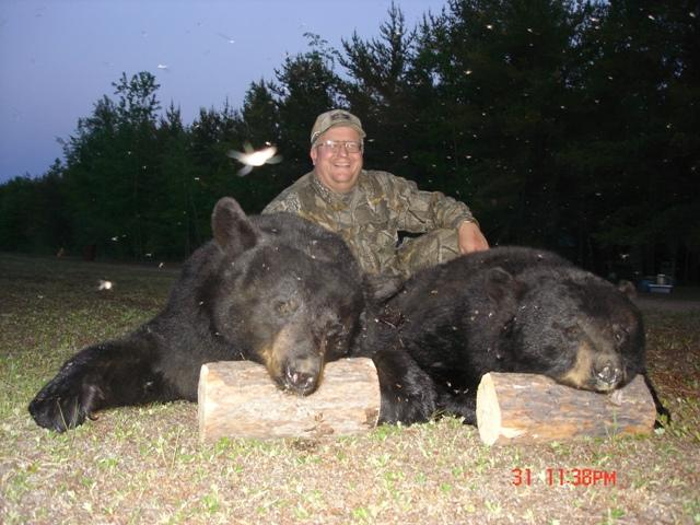 black phase bear