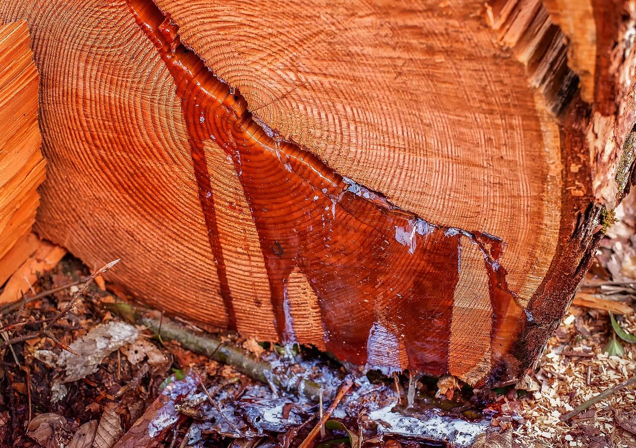 Holz (7 interessante Fakten)