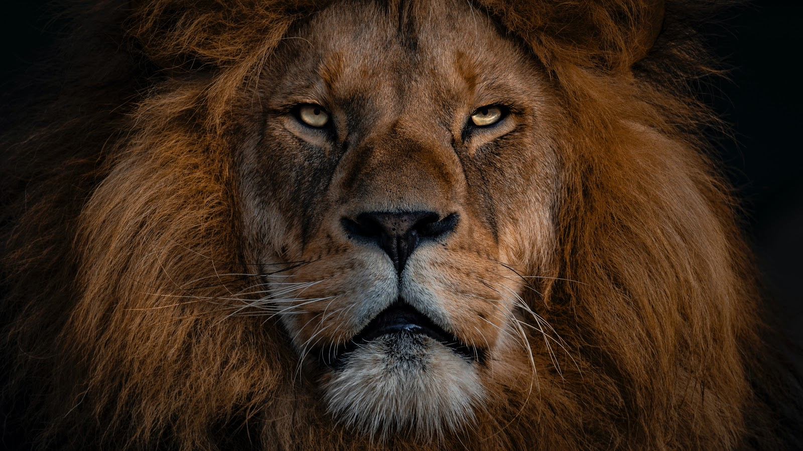 135 King Quotes about Power