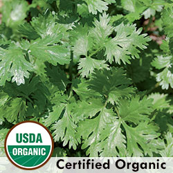 https://hudsonvalleyseed.com/cilantro-coriander.html