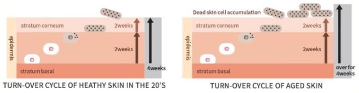 Tìm hiểu về vi kim tế bào gốc sẽ cho bạn bất ngờ về công nghệ xử lý bề mặt silitox hiệu quả ra sao