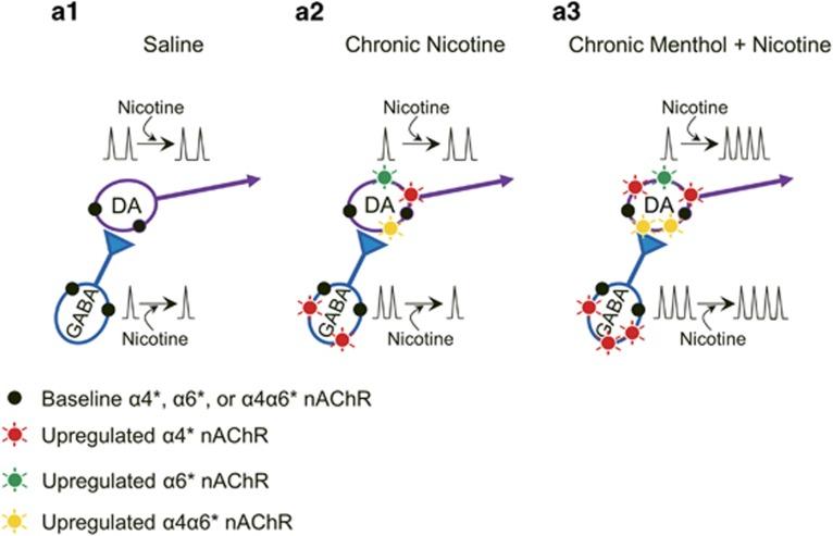 Chronic Menthol plus Nicotine