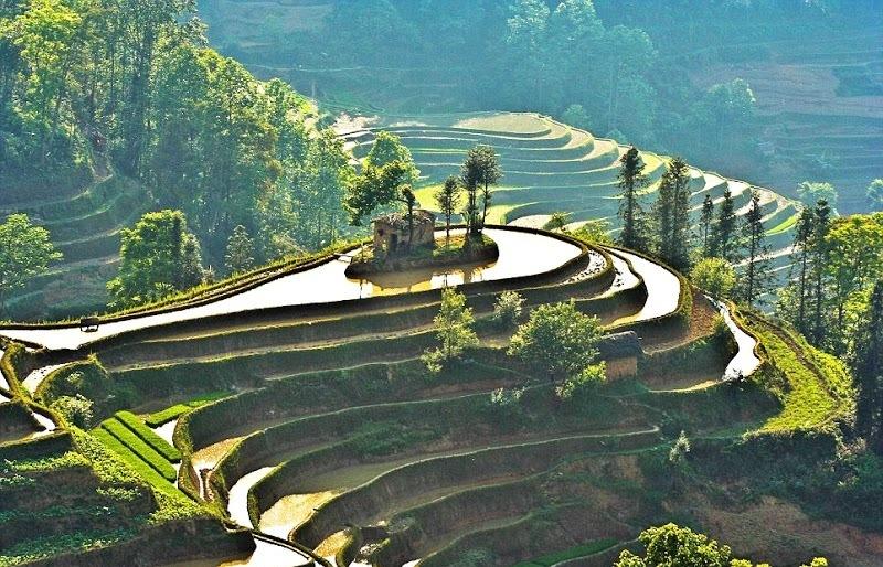 مصاطب الأرز المنحوتة باليد على المنحدرات. uBZuQP8sd6MJzQhmO8dm