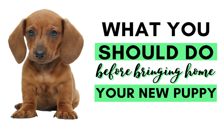 Header Image - What You Should Do Before Bringing home your New Puppy