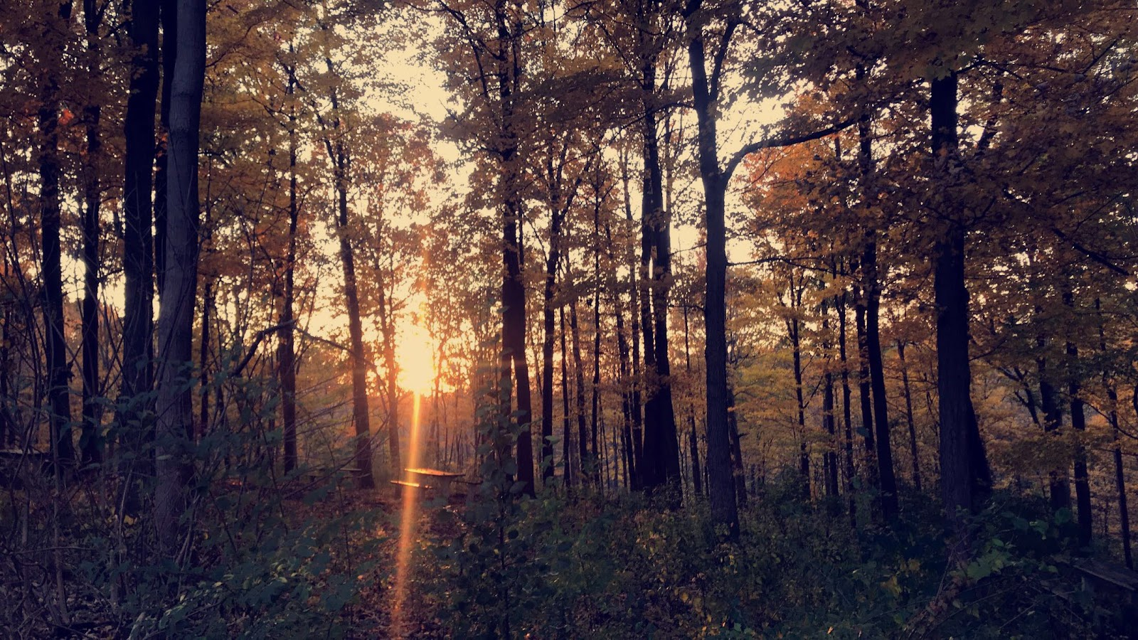 Trees with yellow leaves and bright sunlight shining through them