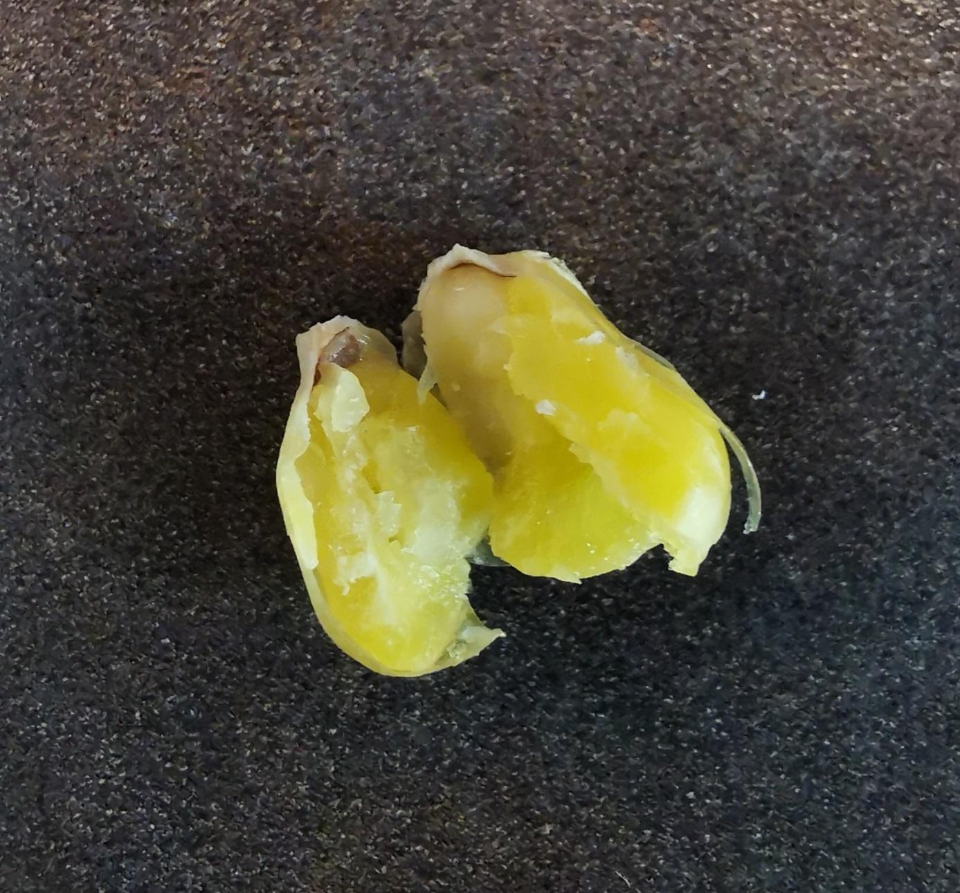 Den Mais mit den Fingern zerdrückt – Nicht alle Körner werden exakt den gleichen Härtegrad haben – das ist aber kein Problem