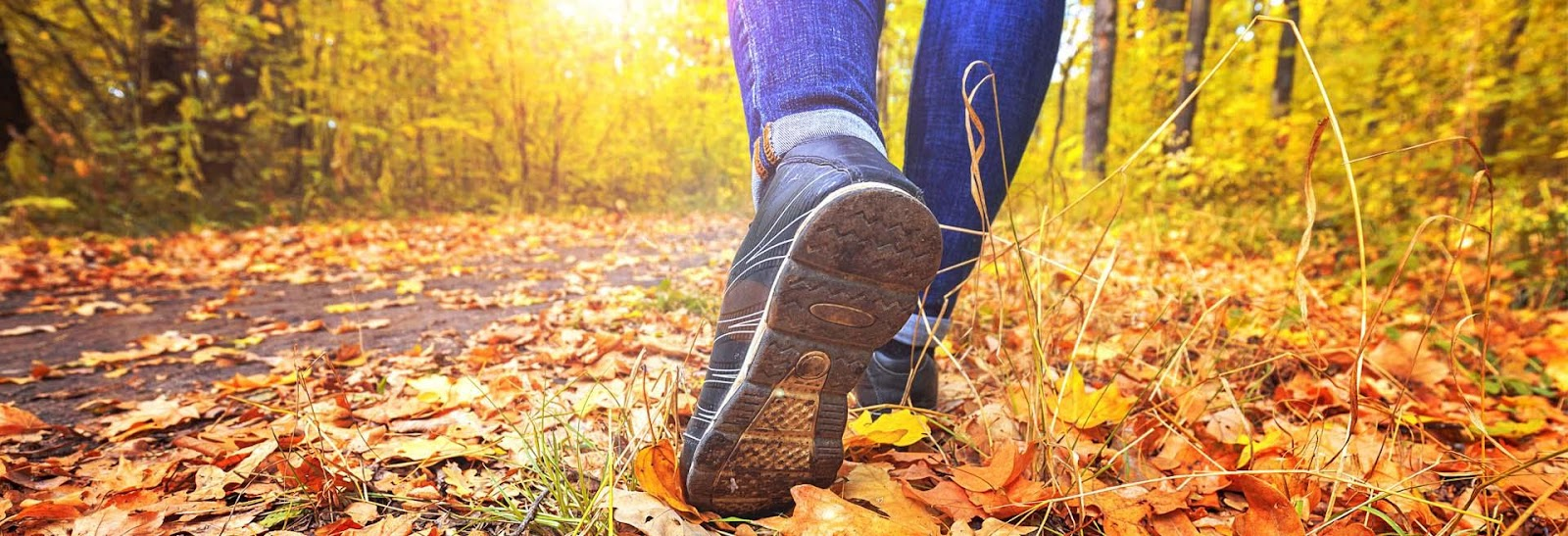 Countryside walks | Bracknell Forest Council