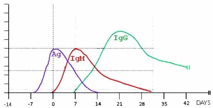 Antigén teszt és szerológiai tesztek viszonya