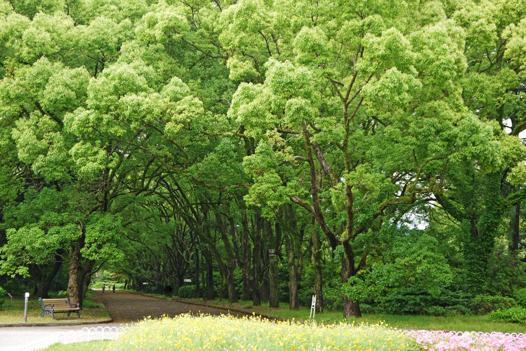 Alt:Kyoto Botanical Garden