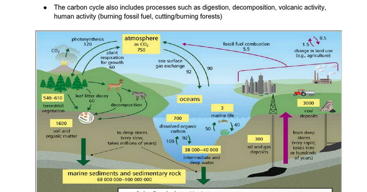 42 the carbon cycle google docs ccuart Image collections