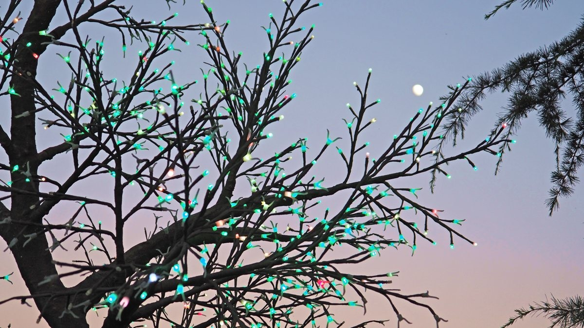 The Health and Wellness Tree with the Moon.