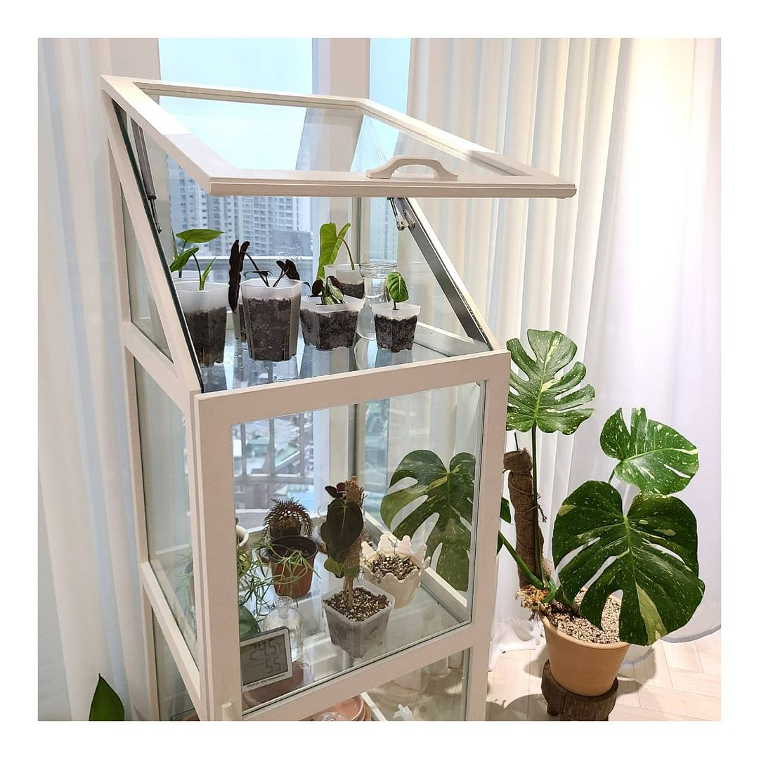 Indoor plants are a way for you to create your own indoor garden space.