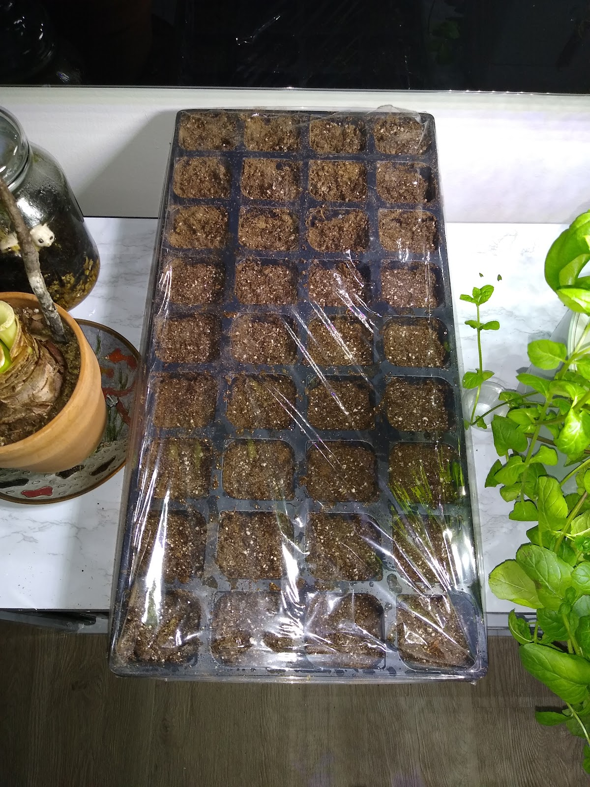 seed starting indoors picture