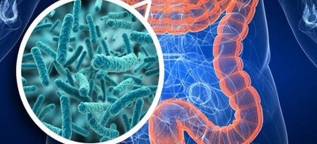 microbiota.jpg