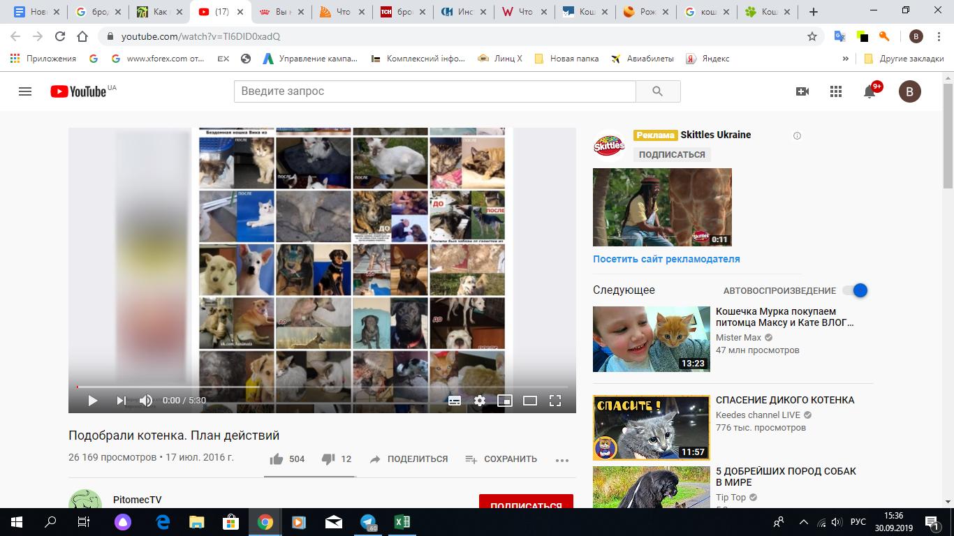 Скрин YouTube канала, где рассказано, что делать с подобранным котенком.