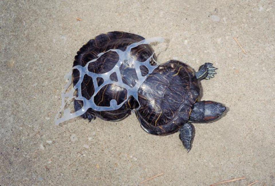 Plastik trafia do mórz i oceanów zabijając zwierzęta