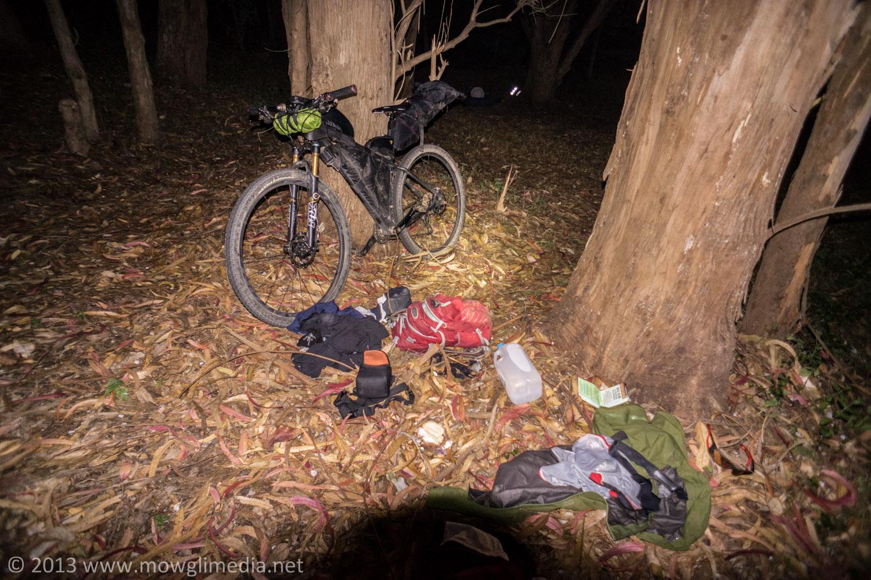 Campsite in a eucalyptus grove