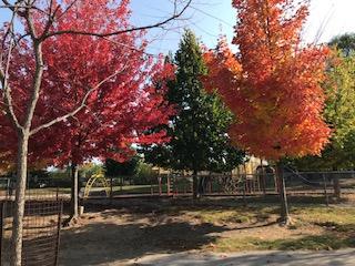 image of school yard