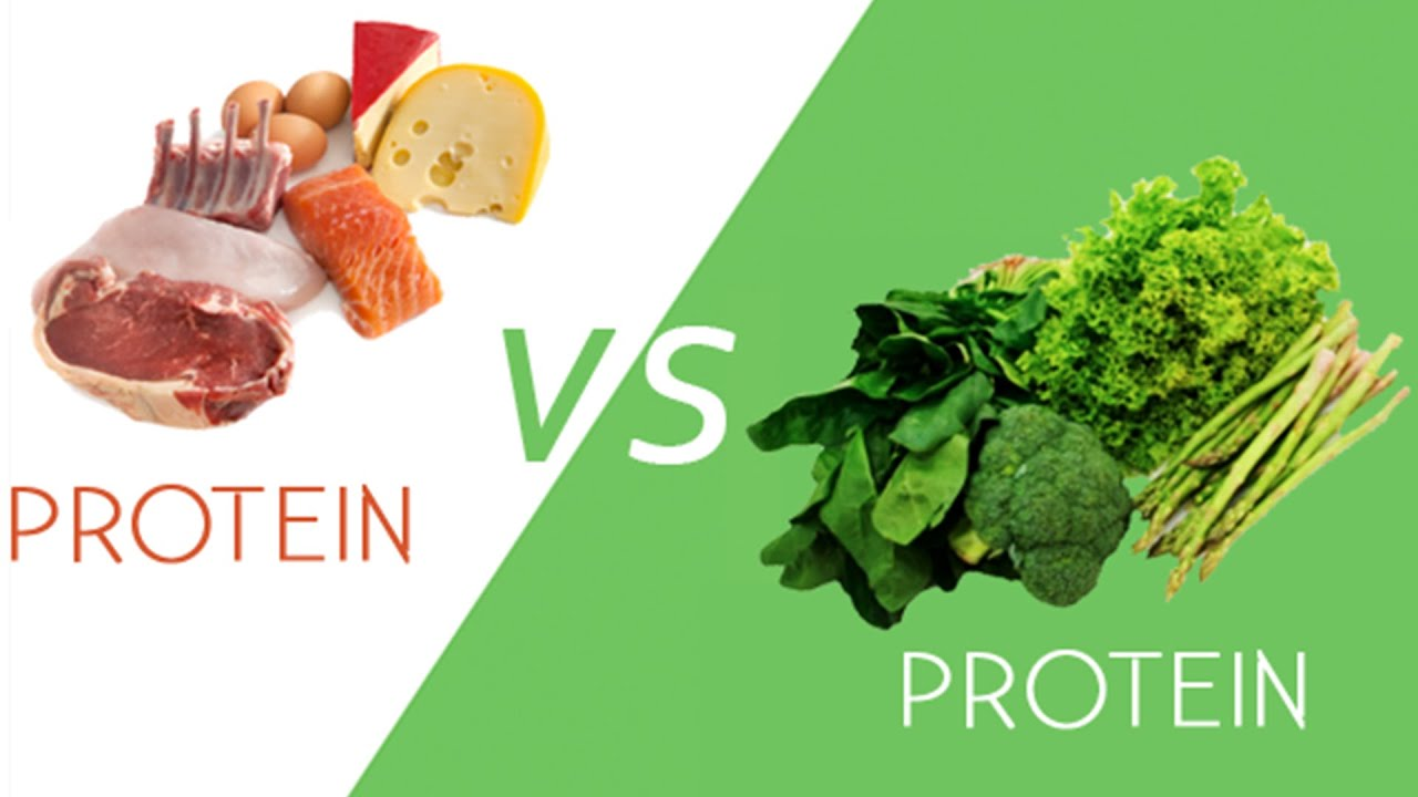 7 Best Non Dairy Vegan Plant Based Protein Powder Products You Need to Know 1