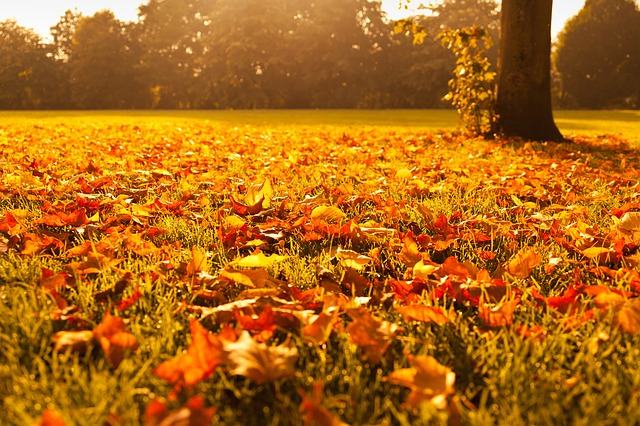 autumn-72736_640.jpg