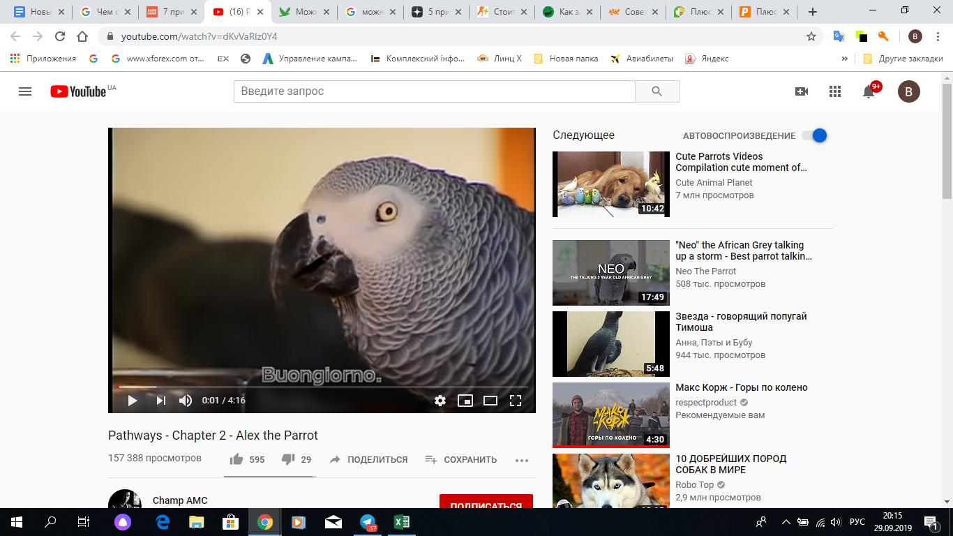 Скрин YouTube канала, где рассказывается о умном попугае Алекс