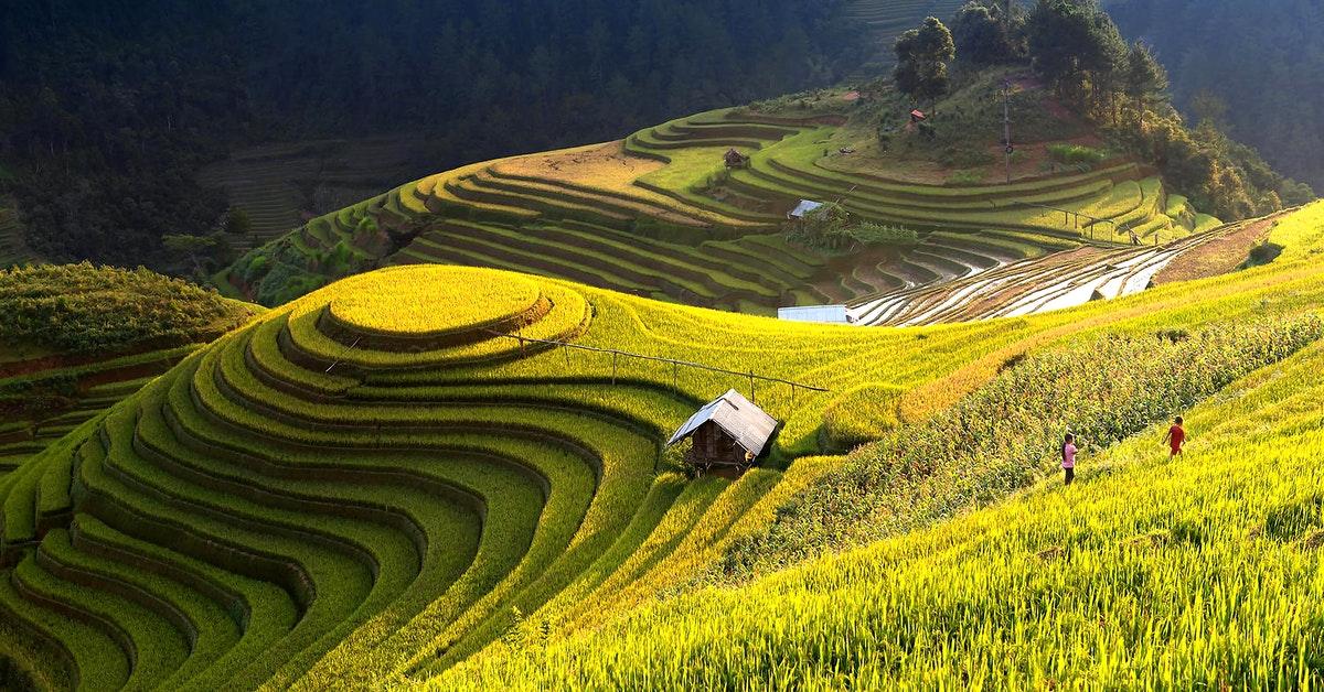 The jatiluwih rice field