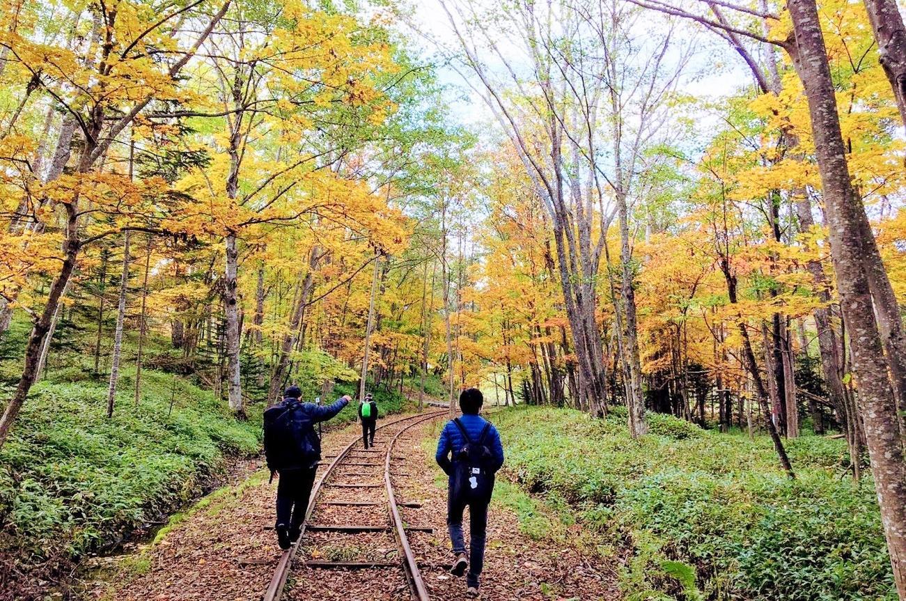 森の中の道を歩く人  自動的に生成された説明