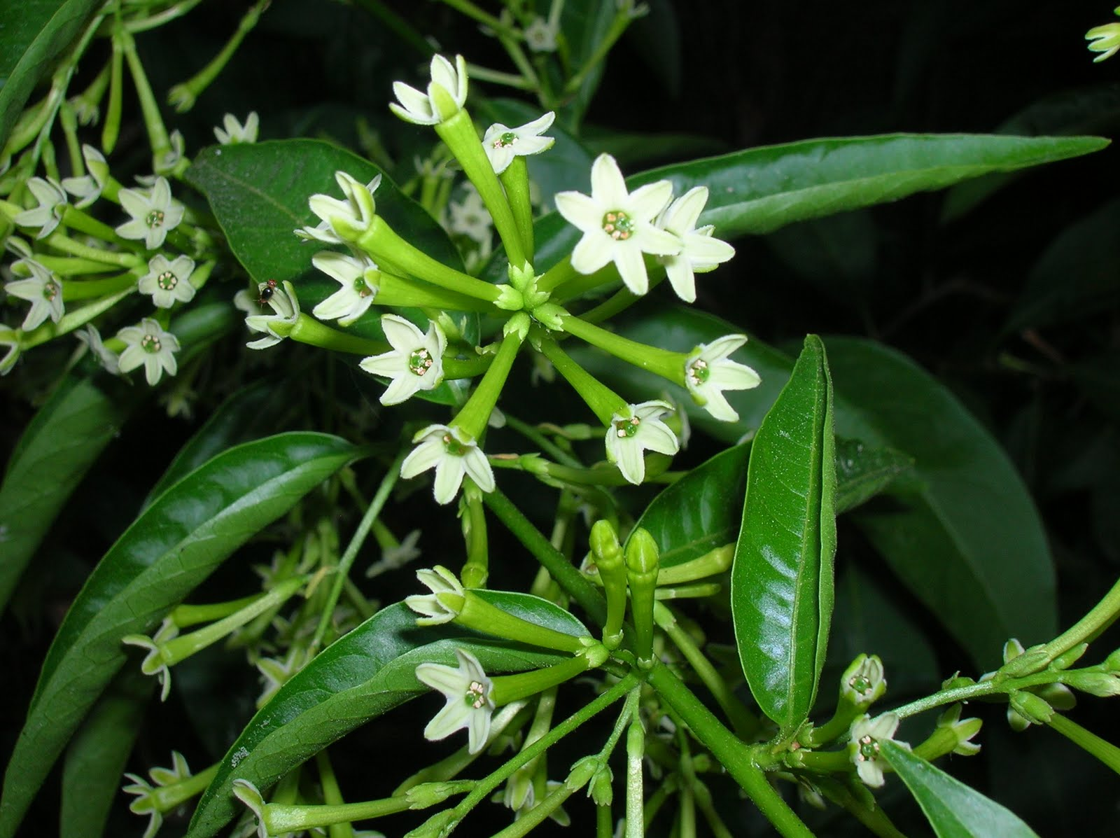 Notas Plenilunicas De Helecho Verde Algunas Ideas Flores Y Plantas