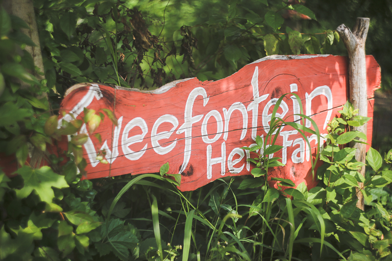 Tweefontein Herb Farm + Hiking in Mohonk Preserve