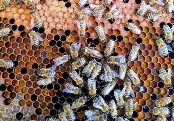 https://savedbydesign.files.wordpress.com/2021/08/beehive-2.jpg?w=600