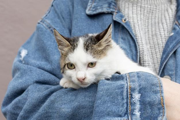 C:\Users\ASUS\Desktop\фото приют\кошаки\close-up-cute-domestic-cat-sitting-owner-arms_23-2148415193.jpg