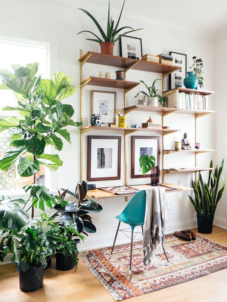 Office Desk Plants