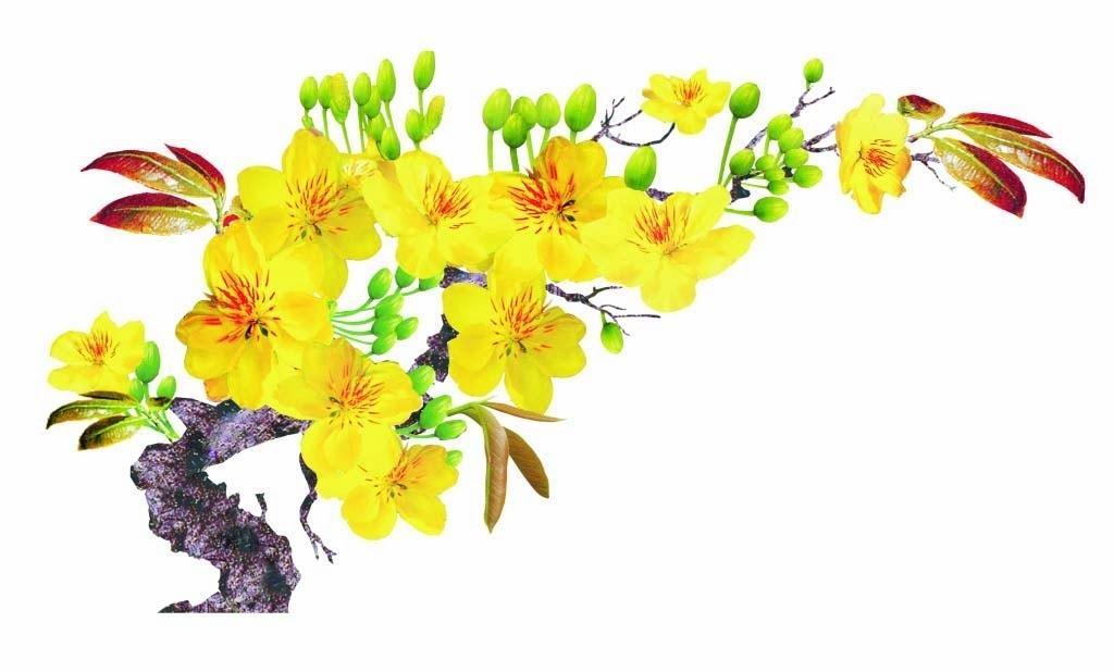 Kết quả hình ảnh cho hoa mai