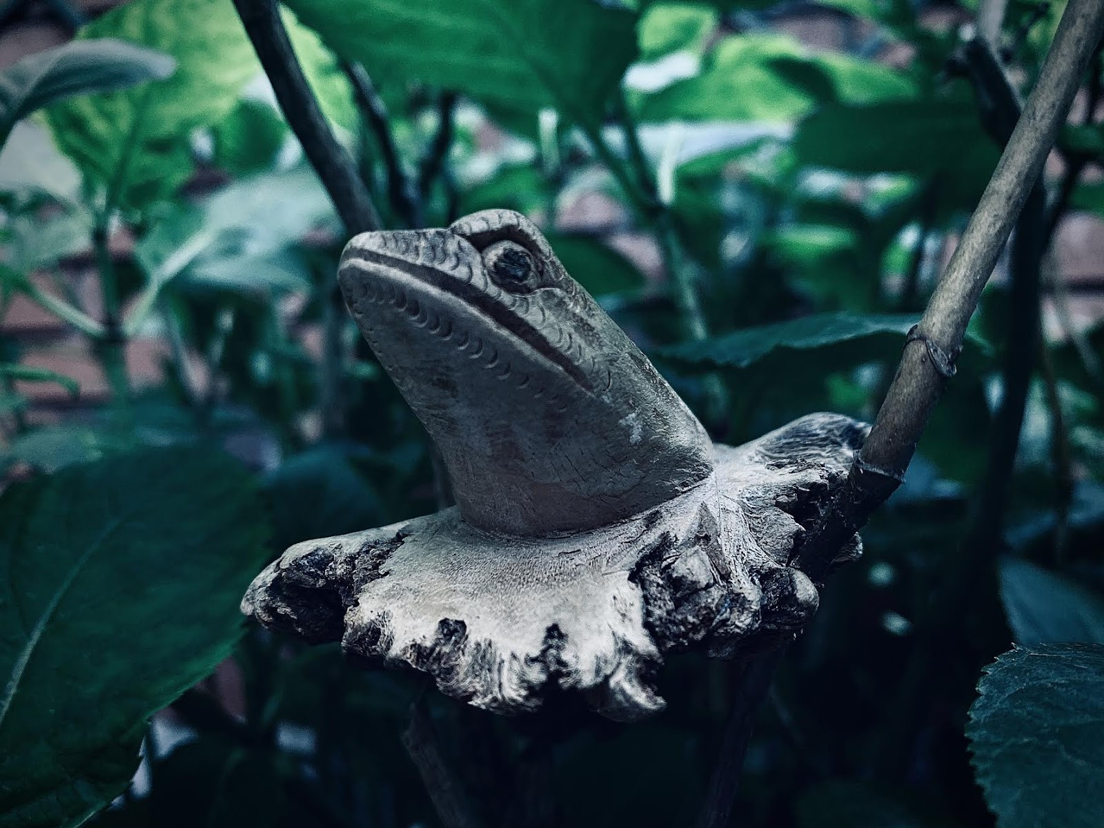 Reverse Frog: More than Just a Dream?