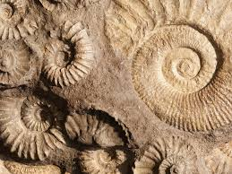 Image result for rocks fossils and soil