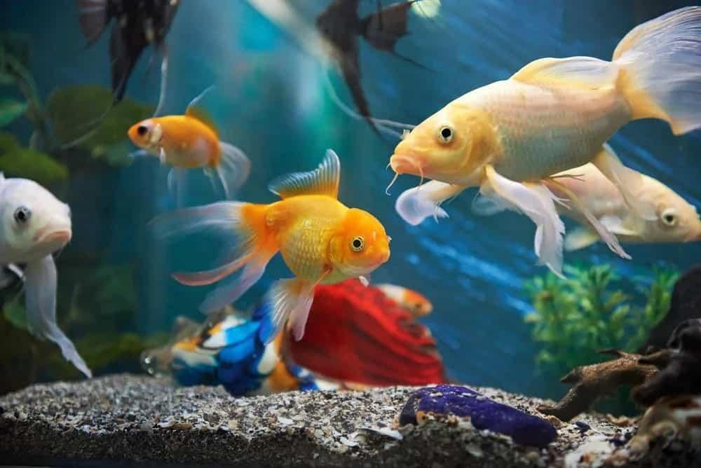 19 of the Best Online Fish Stores (for aquarium fish)