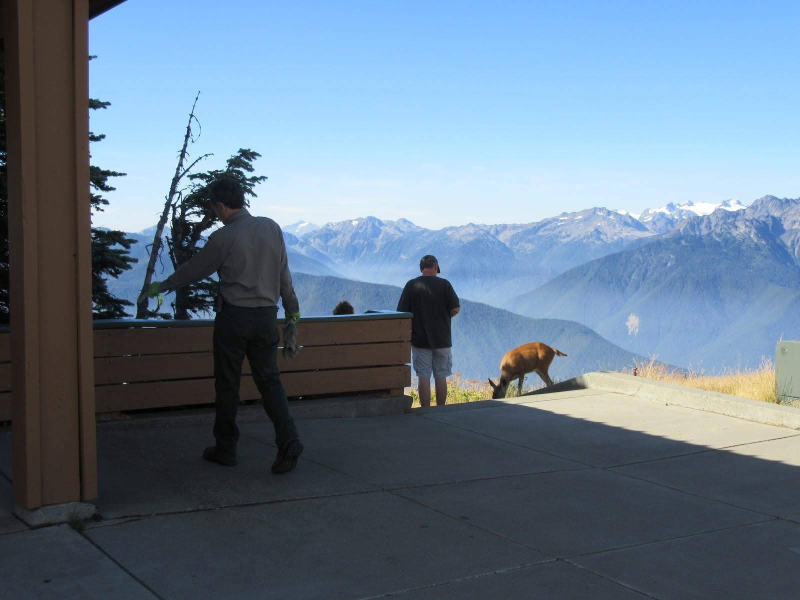 Deer at Hurricane Ridge Visitor Center