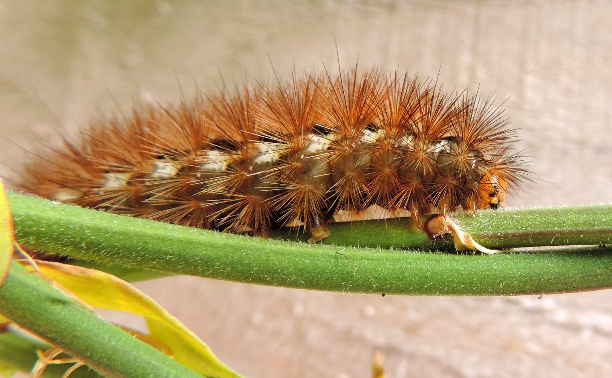 Pest Control: 5 Effective Steps To Keep Pests at Bay