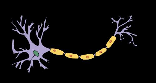 C:\Users\Sergio\Desktop\anatomia neurona.png