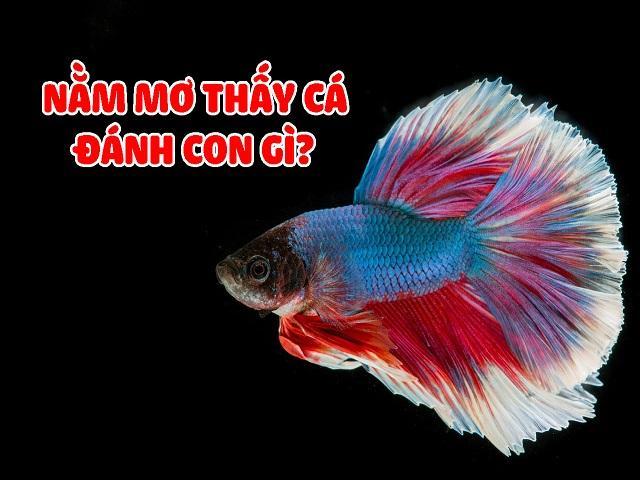 Giấc mơ thấy cá sẽ báo cho bạn những con số tương ứng